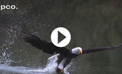 pco.dimax highspeed gallery: Birds in slow motion